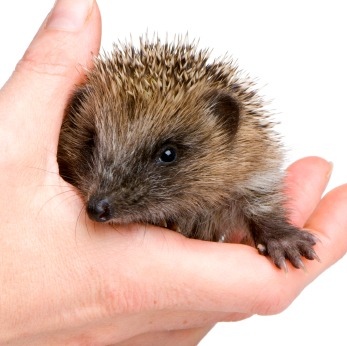 Hedging Health Risks, Hedgehog Style