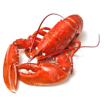 Lobster Economics