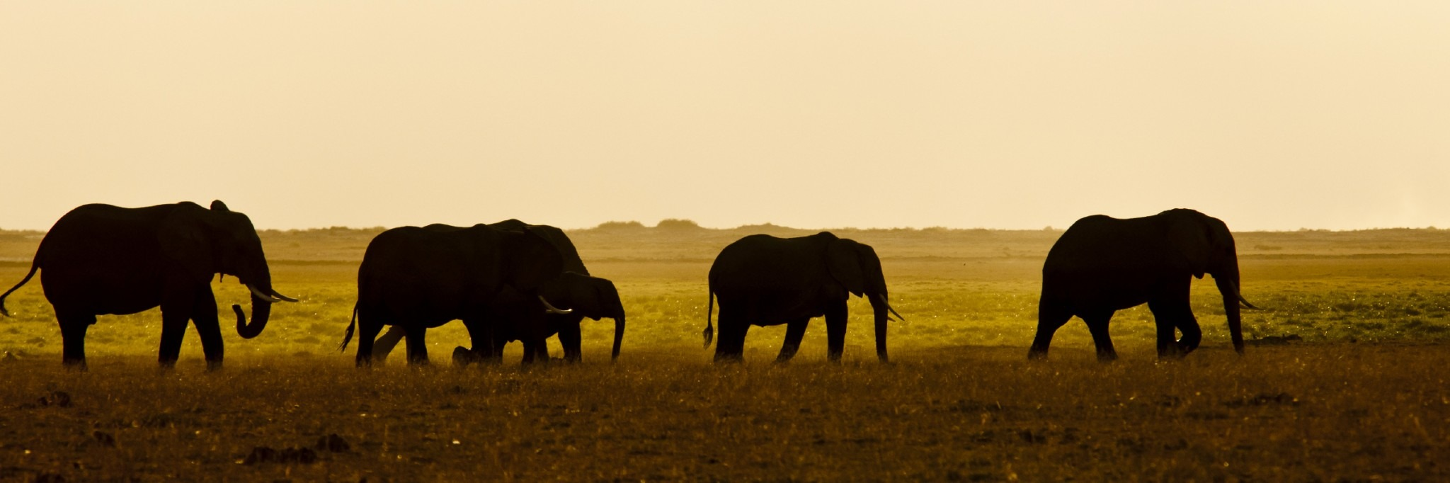 One Reason Why The U.S. Should Not Destroy Its Elephant Ivory