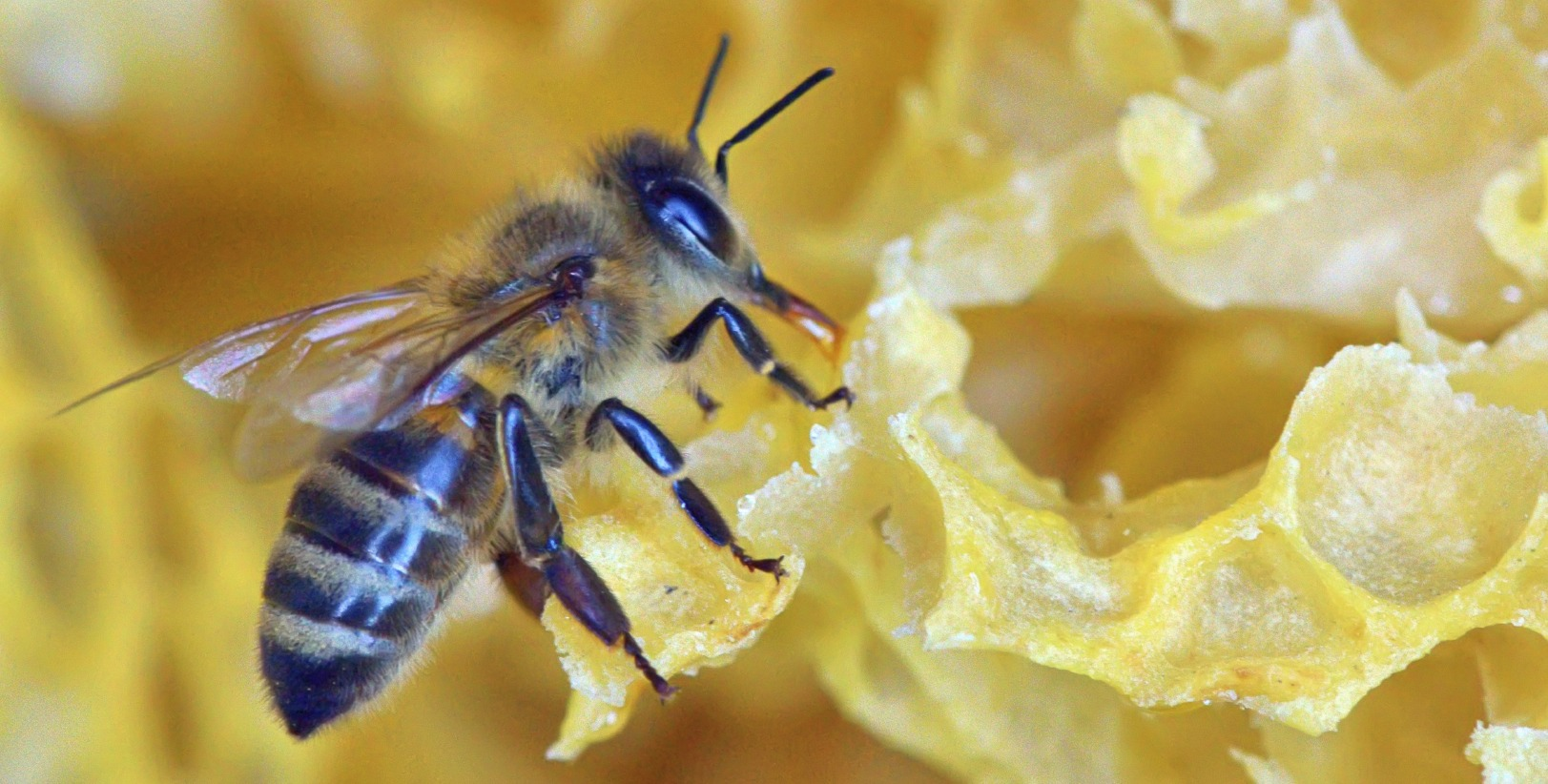 What Happens When People Pollinate Better Than Bees?