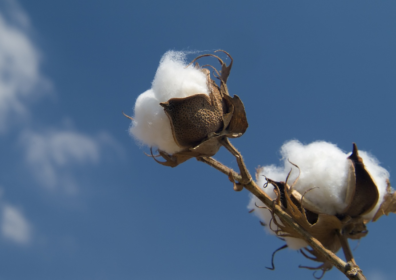 The Cotton Wars