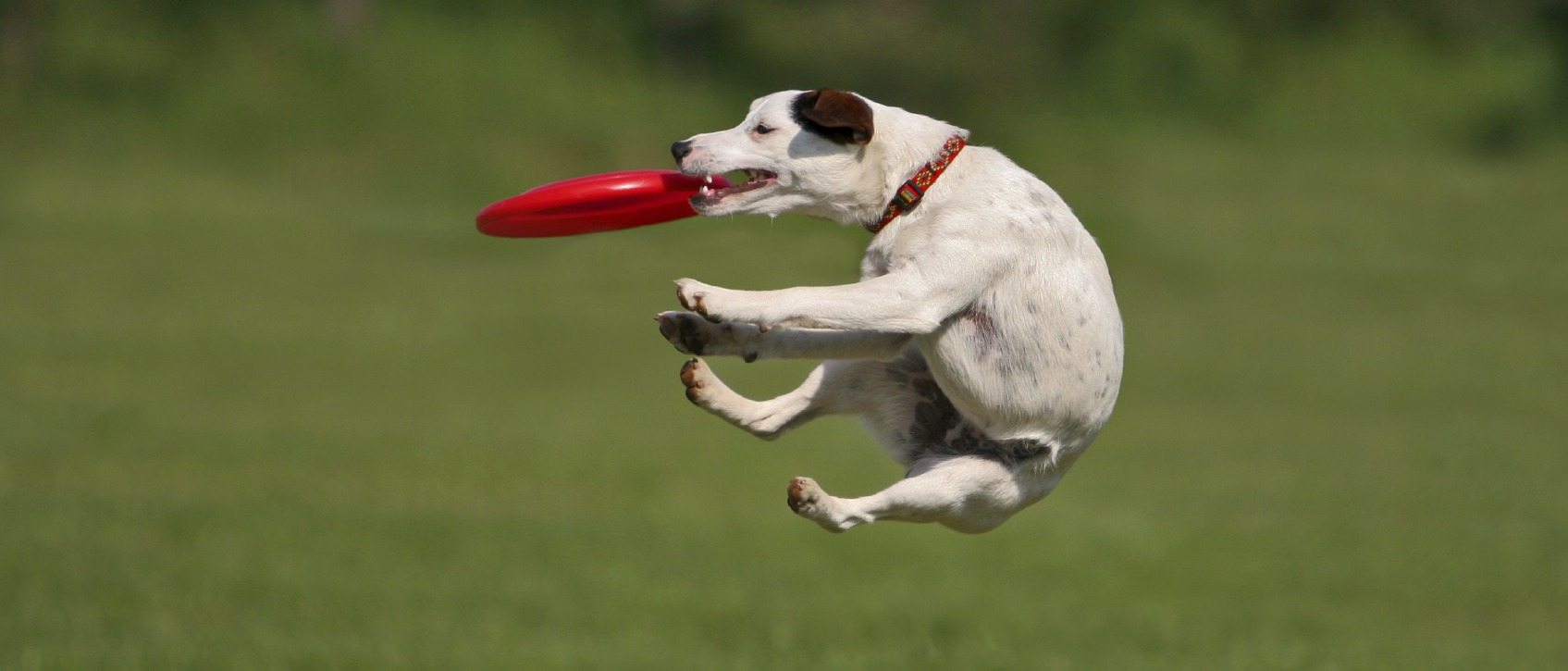 The Significance of the Frisbee