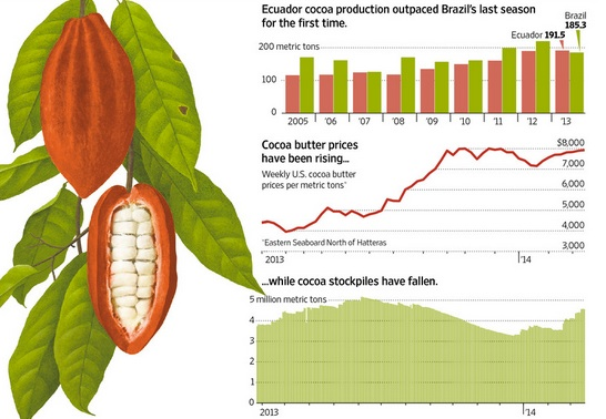 CCN 51 solves cocoa bean supply and demand problems
